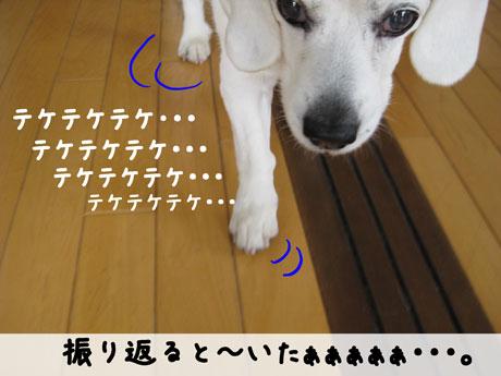 1_20110320133643.jpg
