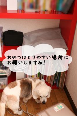 1_20110329143803.jpg