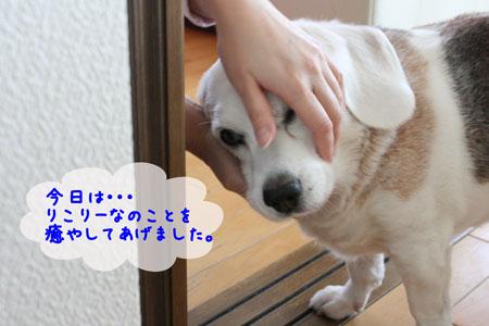 2_20091028142140.jpg