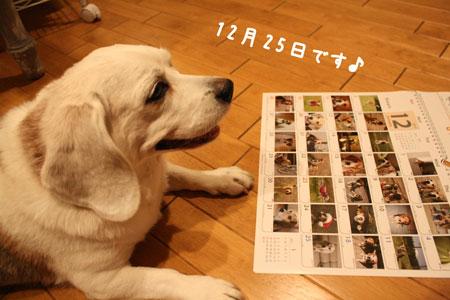 2_20091029175949.jpg