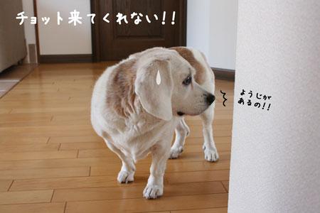2_20091102152935.jpg
