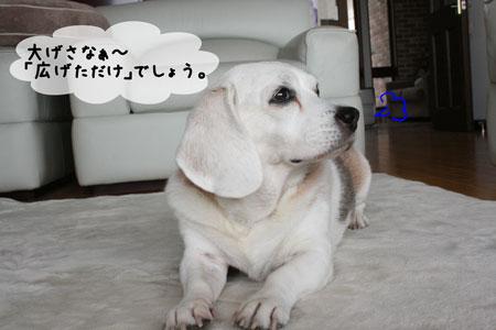 2_20091123120130.jpg