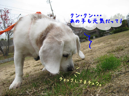 2_20091130134112.jpg