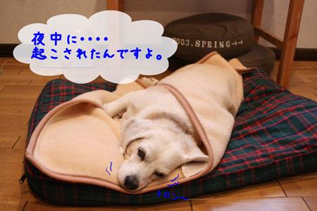 2_20091211134606.jpg