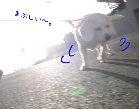 2_20091214160845.jpg