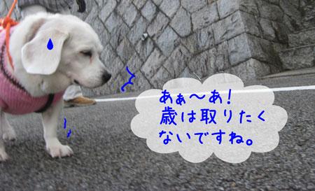 2_20091220232157.jpg