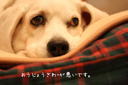 2_20091226202236.jpg