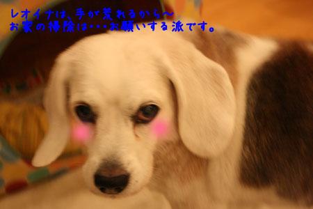 2_20091228203055.jpg