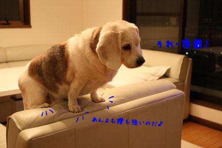 2_20100104154653.jpg