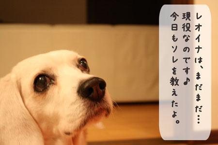 2_20100105211633.jpg
