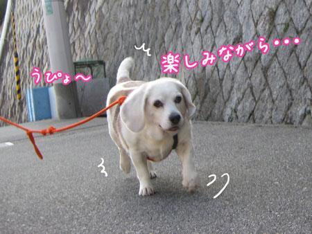 2_20100106141908.jpg