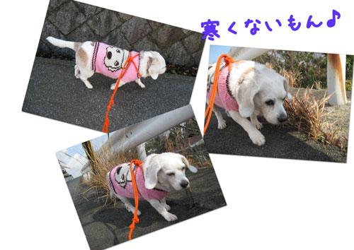2_20100113164048.jpg