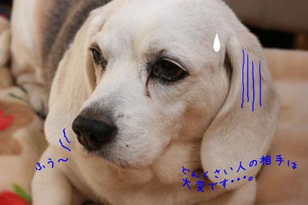2_20100114160501.jpg