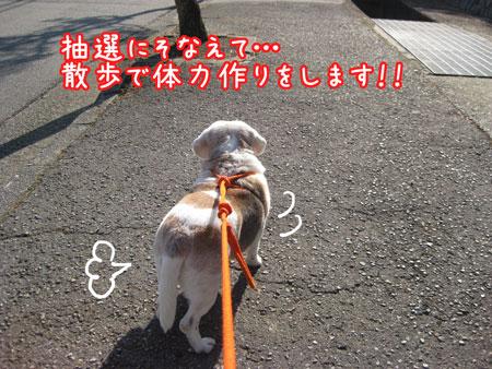 2_20100120203316.jpg