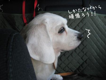 2_20100122173307.jpg