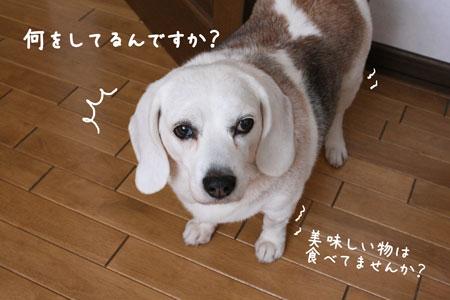 2_20100127122923.jpg