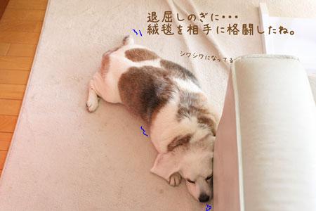 2_20100131135035.jpg