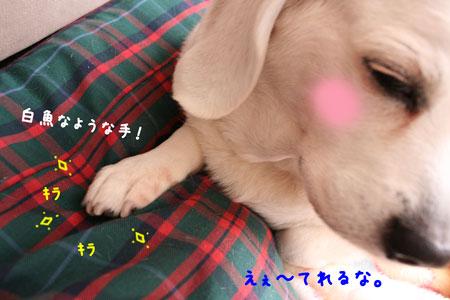 2_20100204120629.jpg
