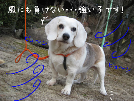 2_20100205151247.jpg