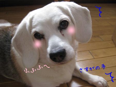 2_20100206135638.jpg