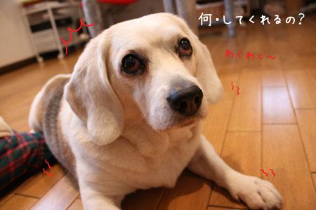 2_20100211133841.jpg