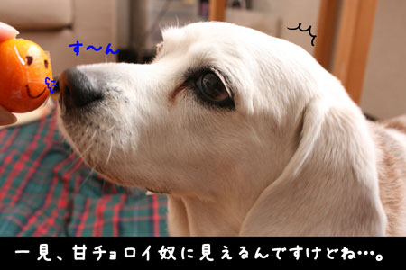 2_20100228174508.jpg
