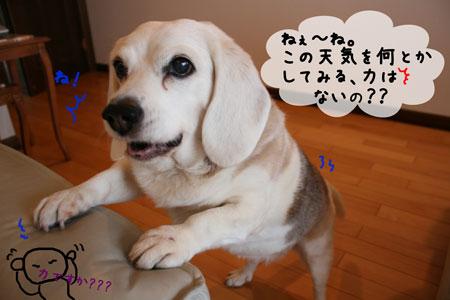 2_20100324123049.jpg