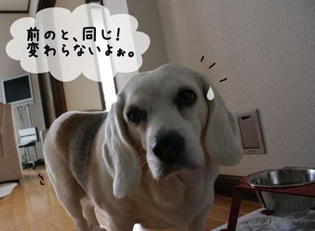 2_20100328163300.jpg