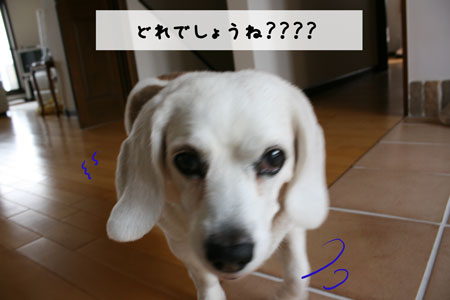 2_20100402155200.jpg