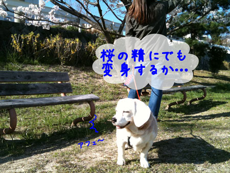 2_20100408174948.jpg