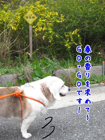2_20100413154656.jpg
