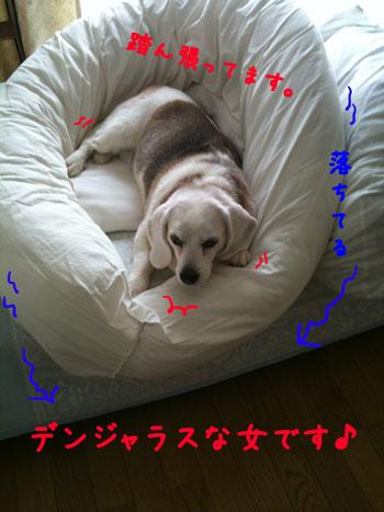 2_20100420143144.jpg