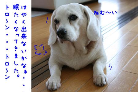 2_20100425125332.jpg