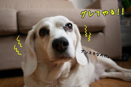 2_20100504173801.jpg