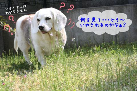 2_20100505145855.jpg
