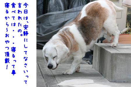 2_20100506144105.jpg