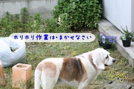 2_20100510134050.jpg