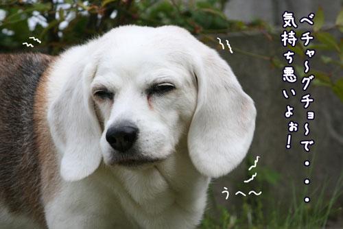 2_20100520182308.jpg
