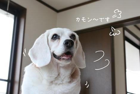 2_20100521170955.jpg