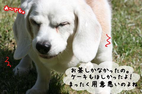 2_20100529153449.jpg