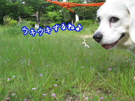 2_20100531164726.jpg