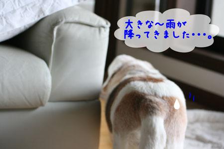 2_20100601150111.jpg