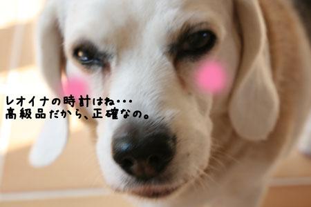 2_20100602180555.jpg