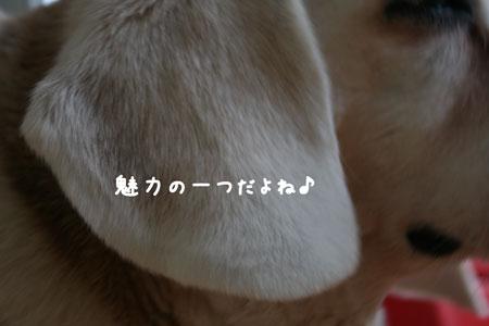 2_20100606171639.jpg