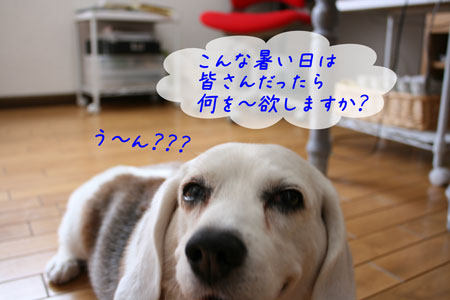 2_20100611154340.jpg