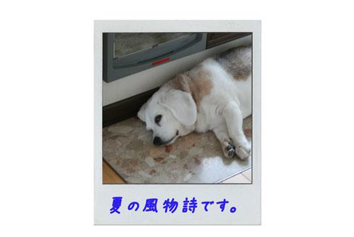 2_20100620133736.jpg