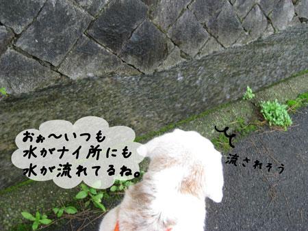 2_20100627143334.jpg