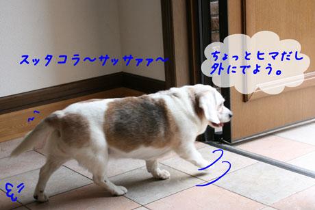 2_20100628163747.jpg