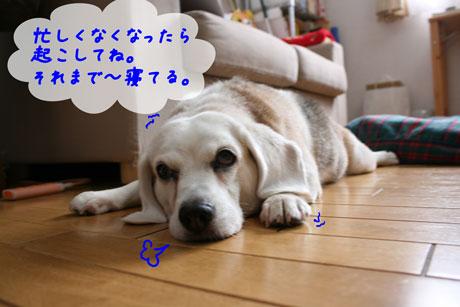 2_20100707152507.jpg