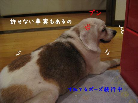2_20100708234240.jpg